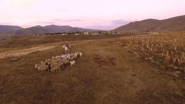 Authentic African herding his sheep