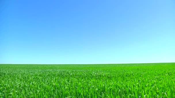 Landscape blue sky and green field