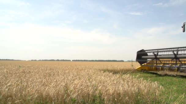Combine harvests . Wheat field.