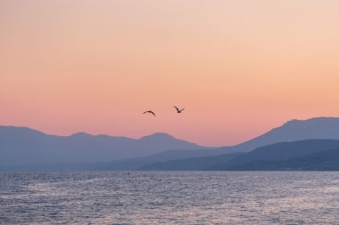 Two gulls over the sea at sunset