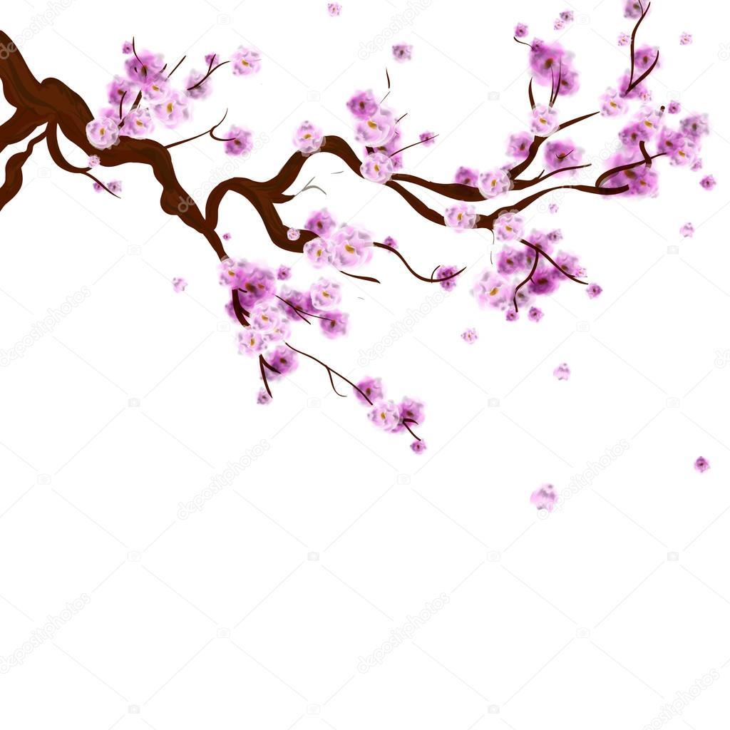 Dibujos Flores De Cerezo Fondo De Acuarela Sakura Con Rama De