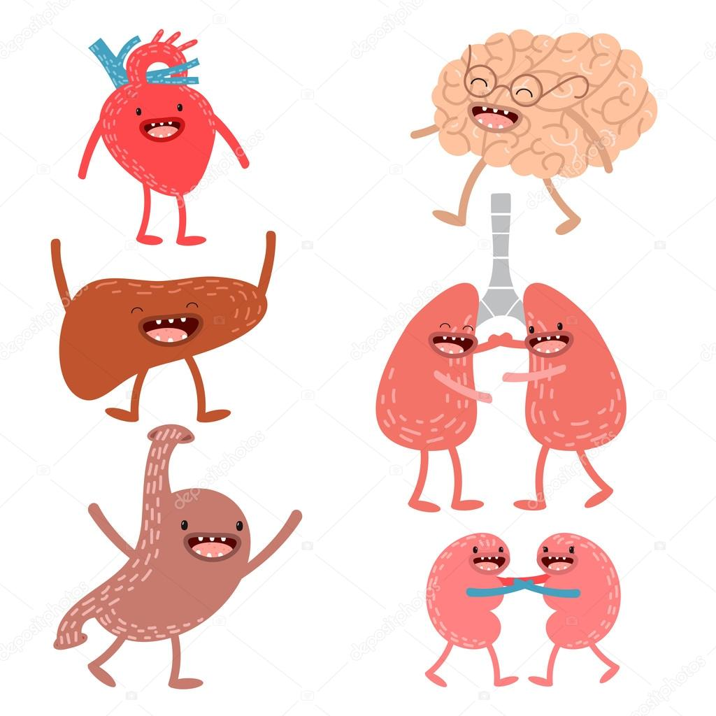 Vector Cartoon menschliche Anatomie. Satz von gesunden Leber, Herz ...