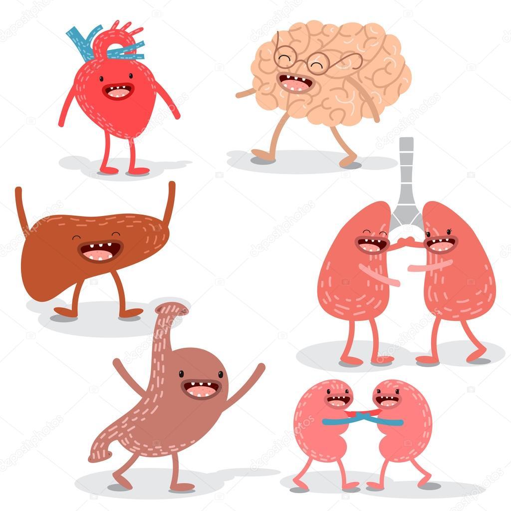 Anatomía humana de dibujos animados de vector. Conjunto de hígado ...