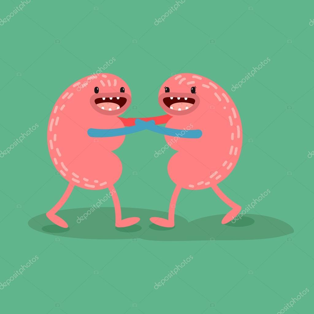Vector cartoon human anatomy. Healthy kidneys — Stock Vector ...