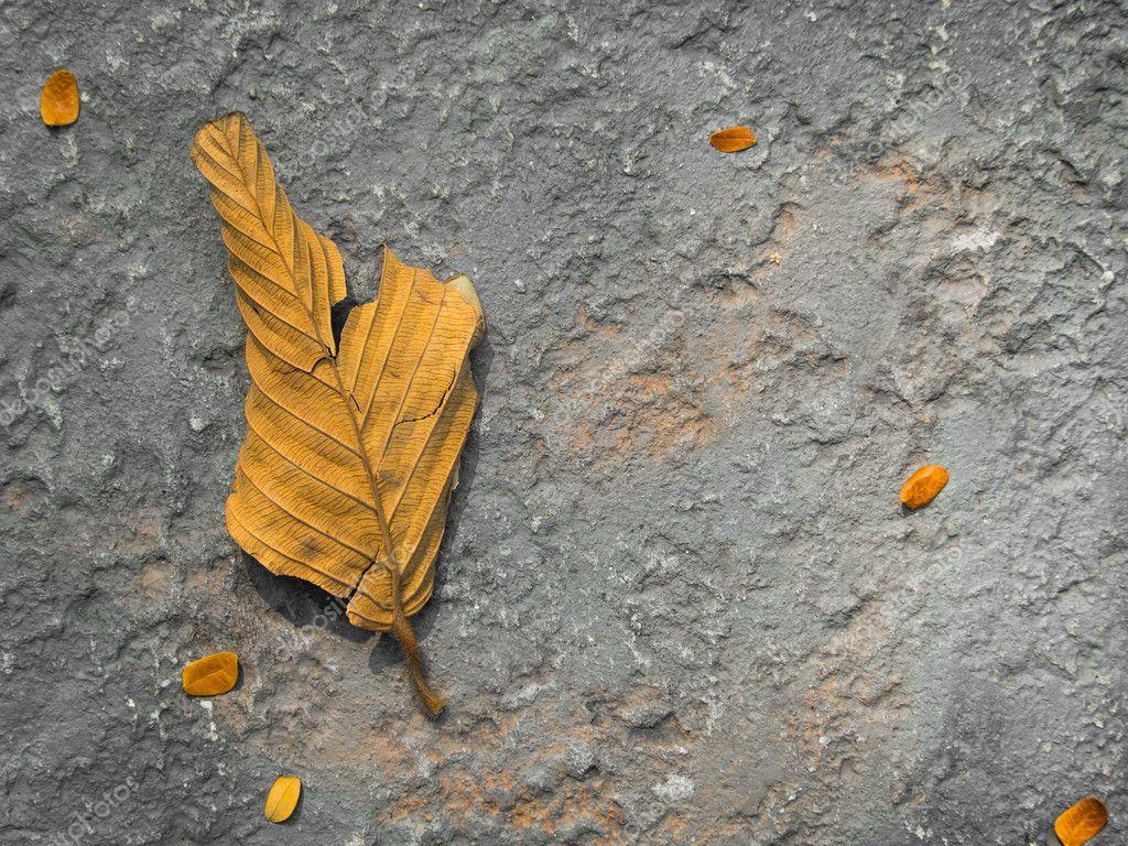 Dry Leaf on the Floor