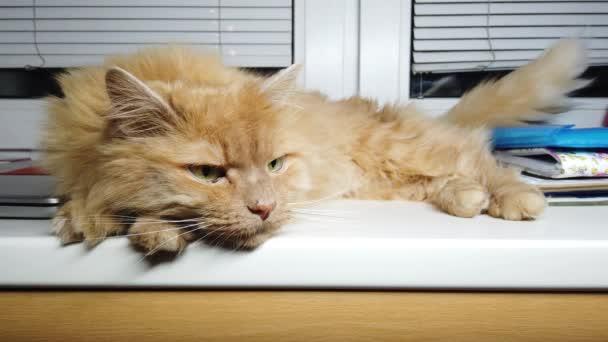 Aranyos vörös macska fekszik az ablakpárkányon. Bolyhos kisállat ül otthon anélkül, hogy séta kívül.