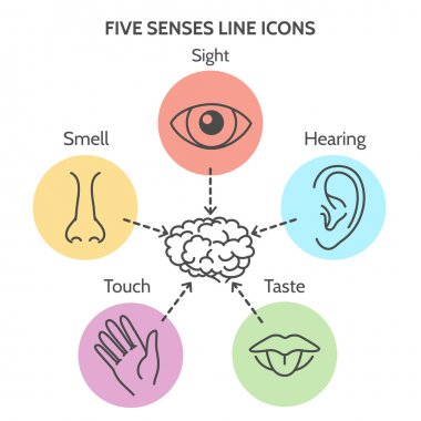 Five senses line icons