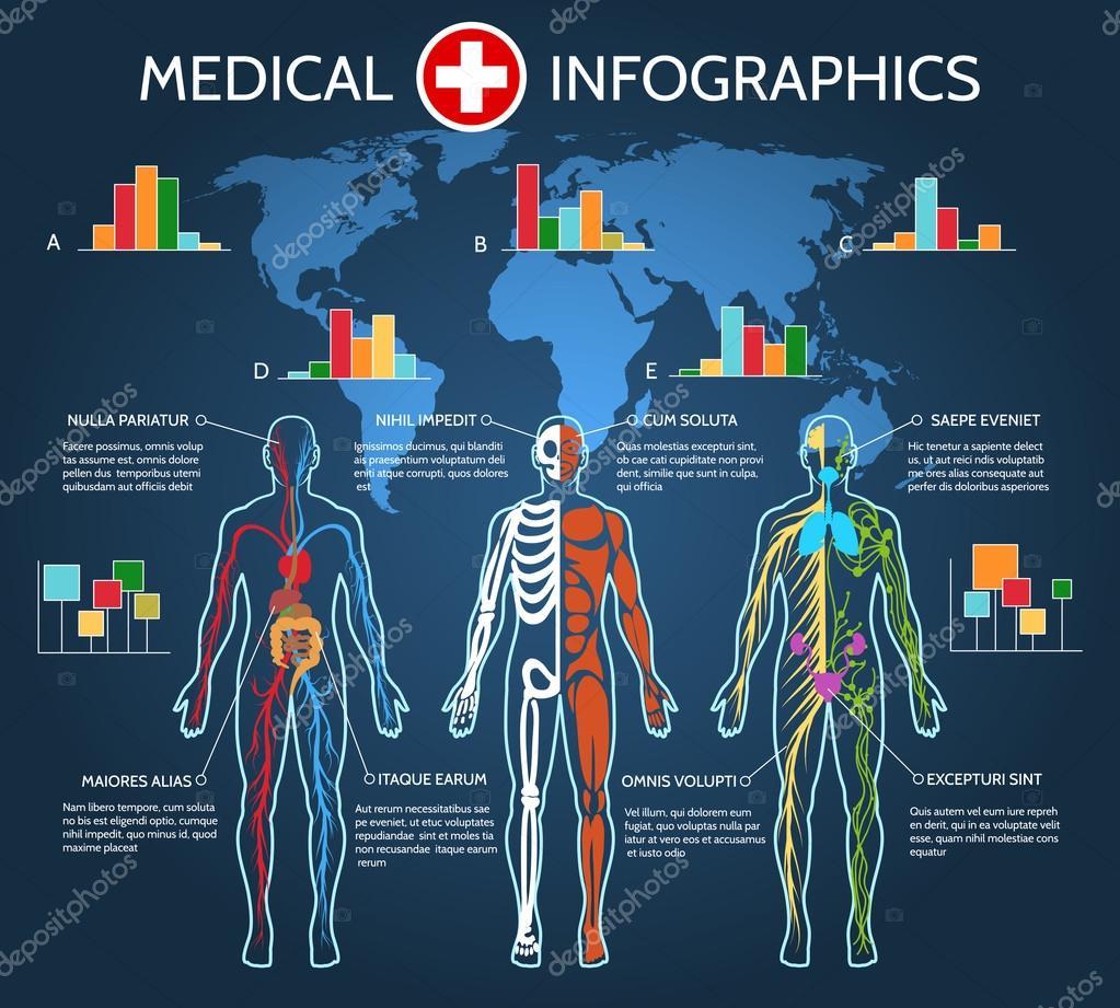 Infografía de anatomía del cuerpo humano — Vector de stock ...