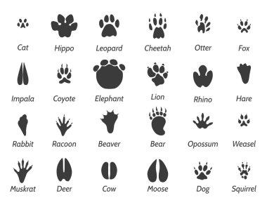 Wildlife animals footprints