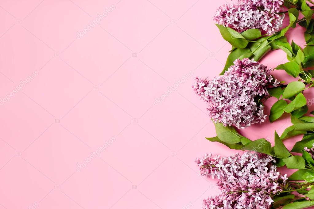 Flores Lilas Con Rosas Sobre Fondo: Fondo Rosa Con Lila Branche. Tarjeta De Felicitación