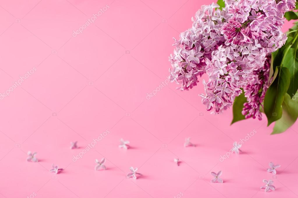 Flores Lilas Con Rosas Sobre Fondo: Fundo Rosa Com Flores Lilás. Cartão, Cartão De Convite