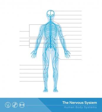 """Картина, постер, плакат, фотообои """"человеческая нервная система """", артикул 104389580"""