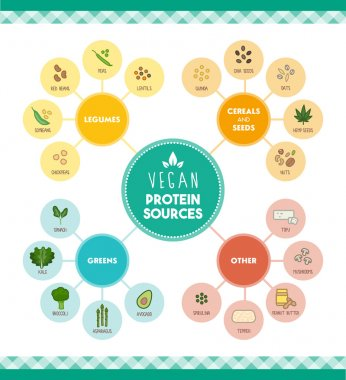 Vegan protein food sources infographic