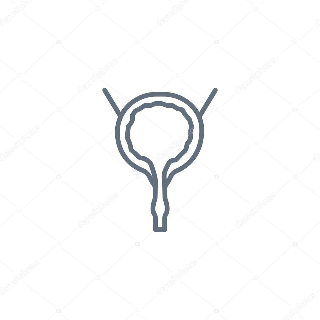 Urinary bladder icon