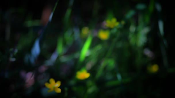 Háttér - egy varázslatos Glade, vándor fókusz