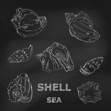 Seashells hand-drawn in a sketchy style