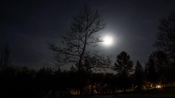 Měsíc nad stromy. Krásná noc