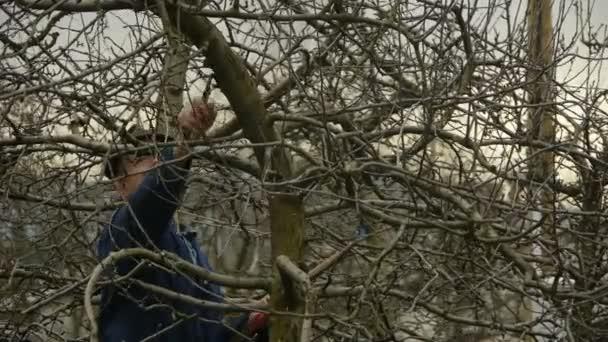 Detail zahradník prořezávání ovocných stromů větve
