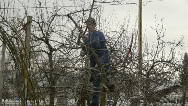 Zahradník pily a prořezávání ovocných stromu větev