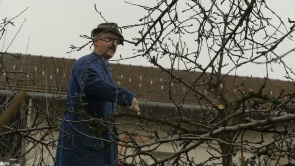 Zahradník na žebříku prořezávání ovocných stromů