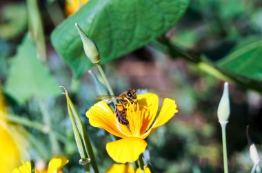 bee on the  a yellow flower