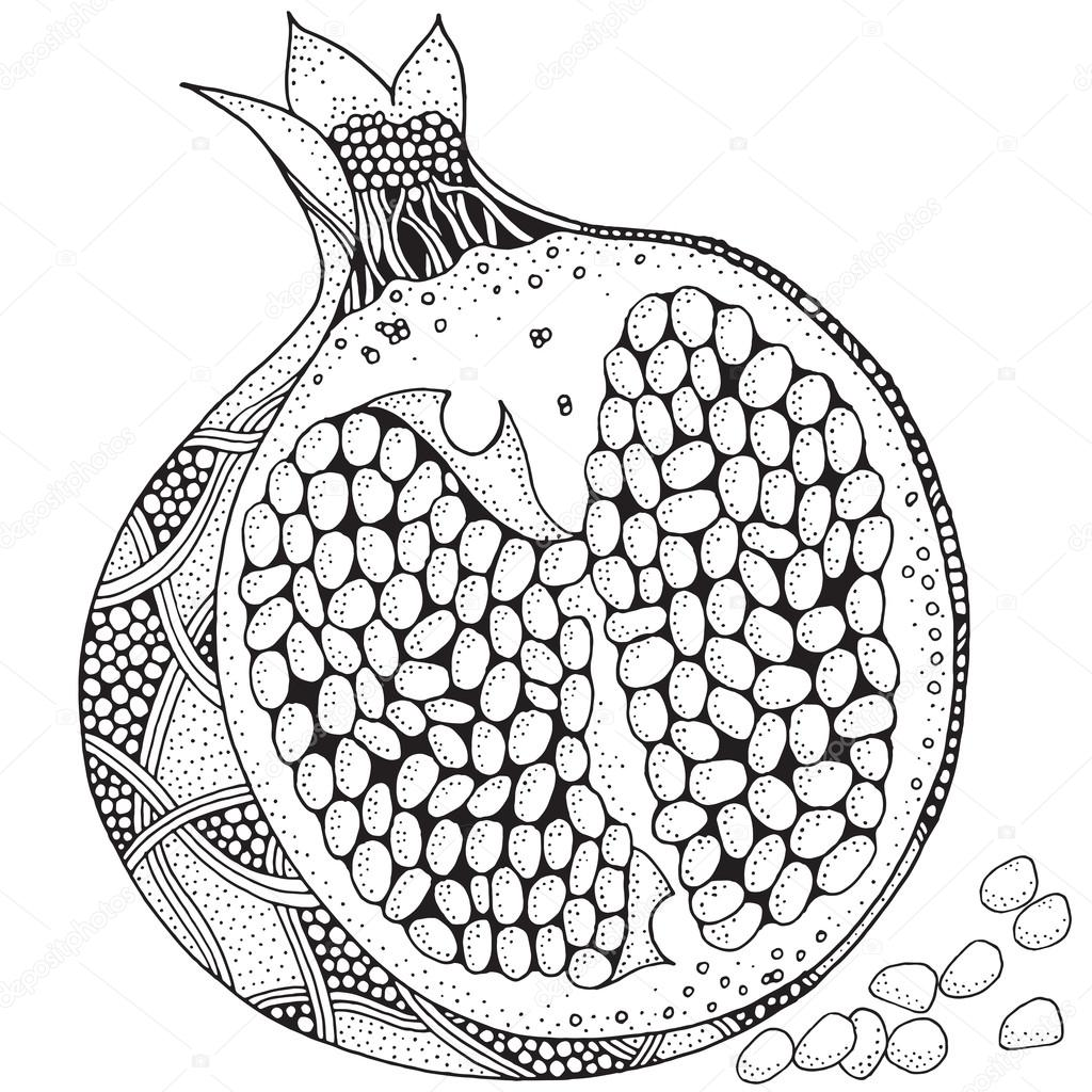Pomegranate Isolated on a white background — Stock Vector ...