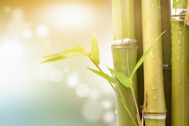 Bamboo leaves and stem