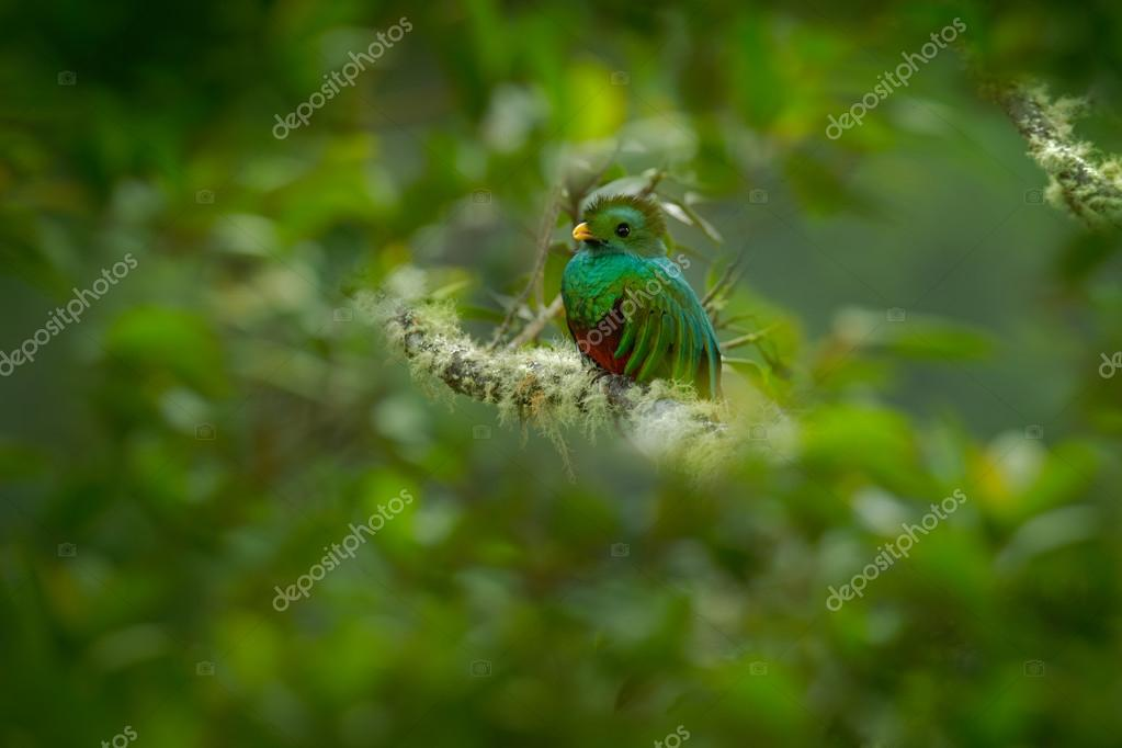Magnificent green and red bird