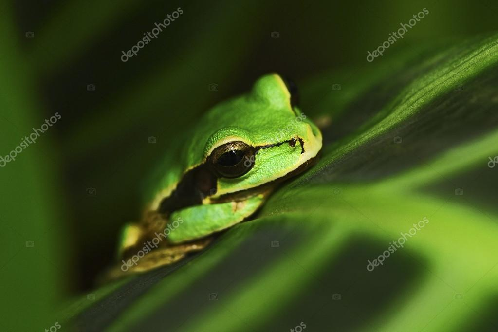 Exotic tropic green frog