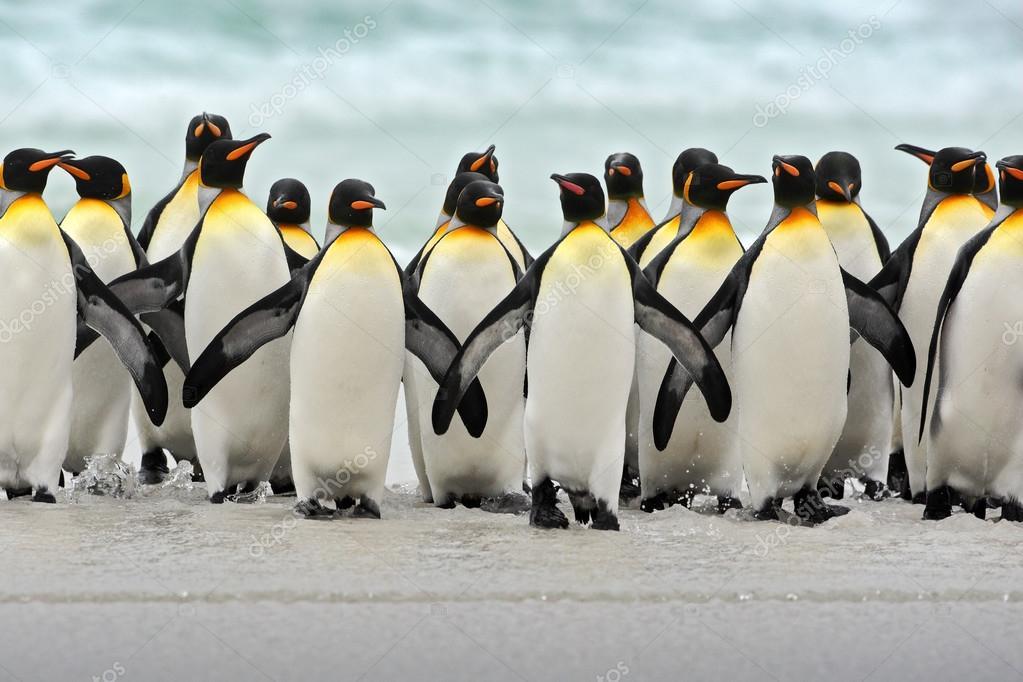 pingüinos #hashtag