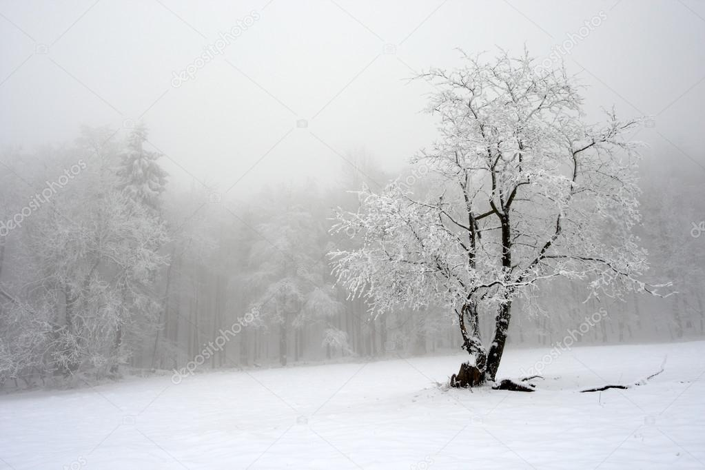 Solitary tree in winter
