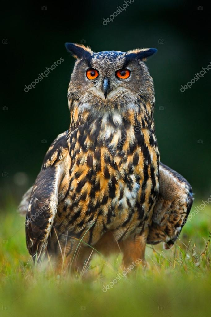 Eagle Owl in the forest