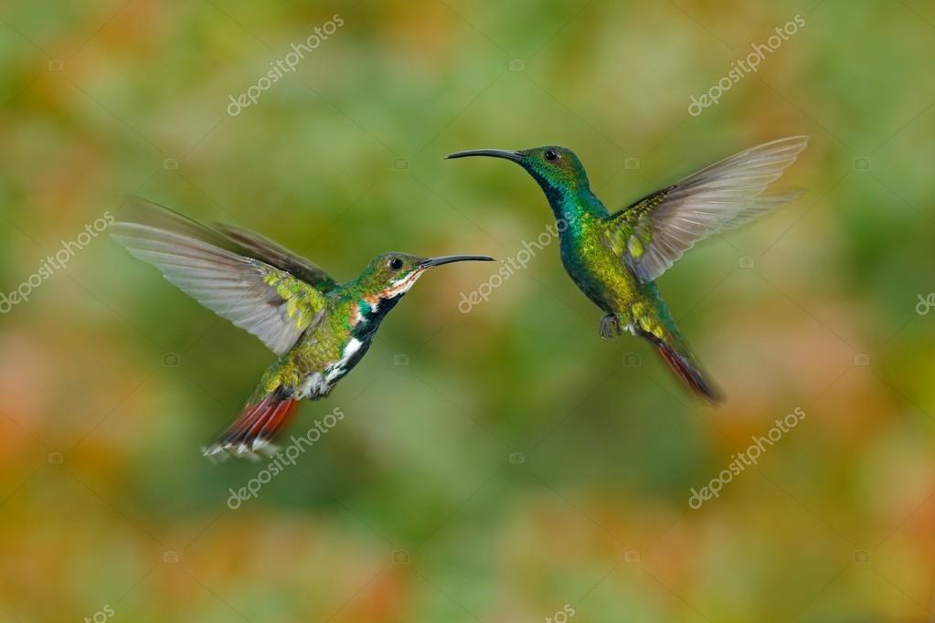 Couple of two hummingbirds  a