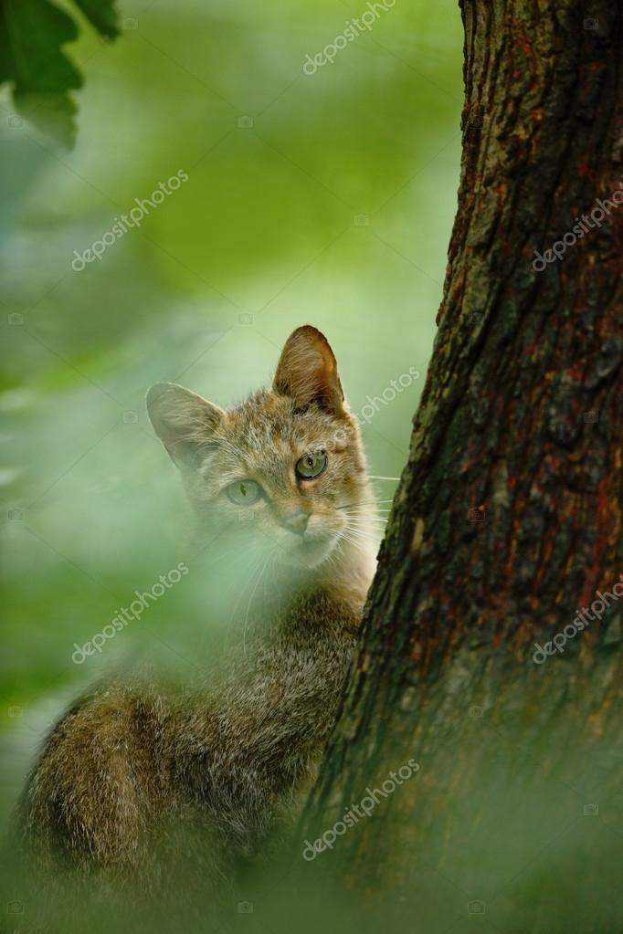 Wild Cat hiden in the green leaves