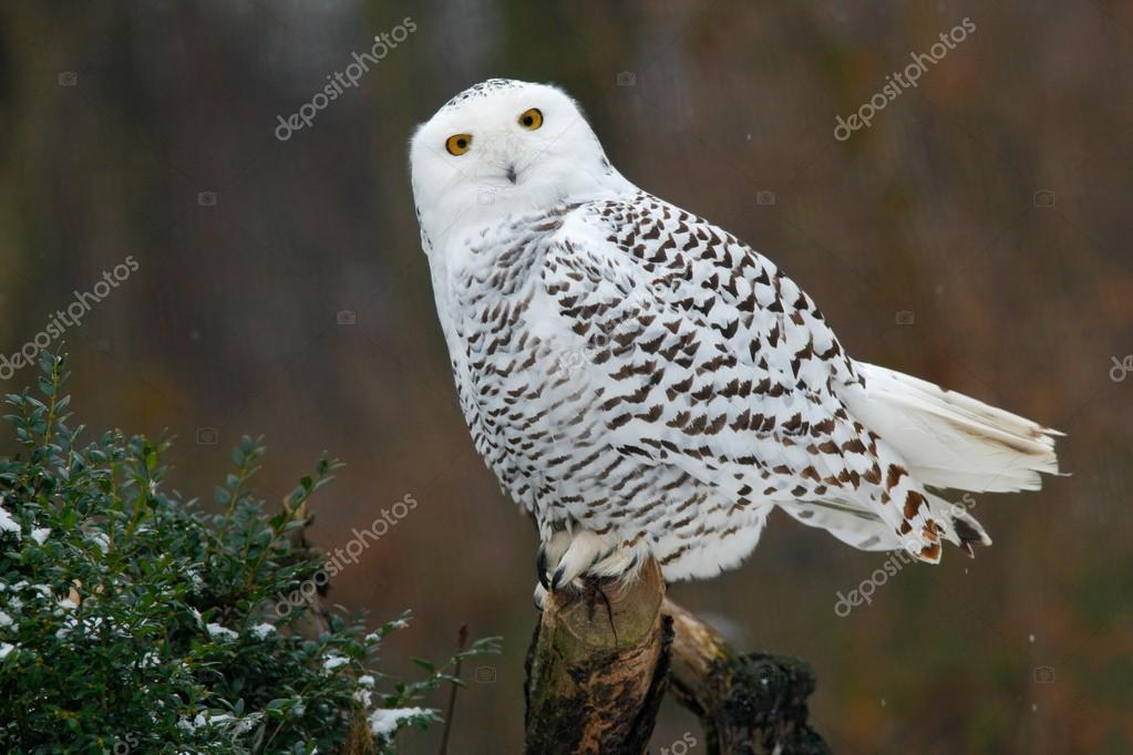 Snowy owl sitting on tree
