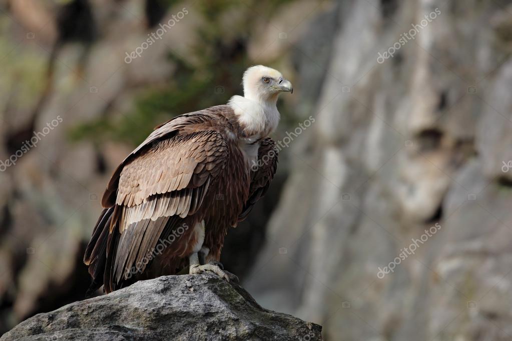 Jak udělat přirozeně velkého ptáka
