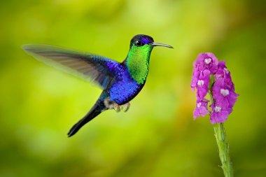 Beautiful shiny tropic bird