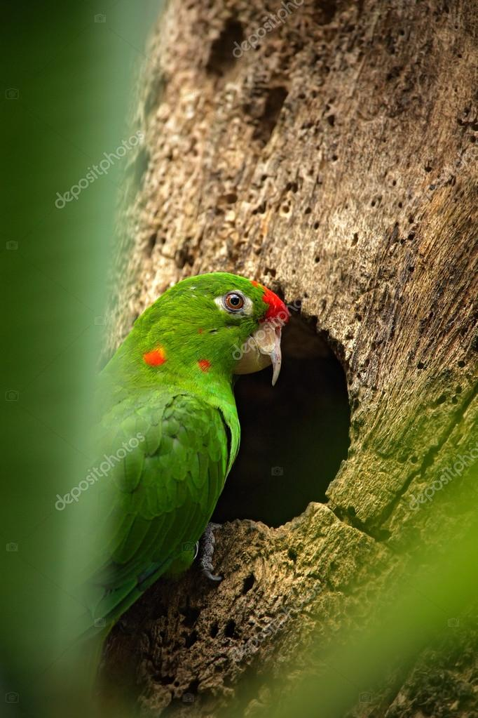 Parrot sitting on the tree