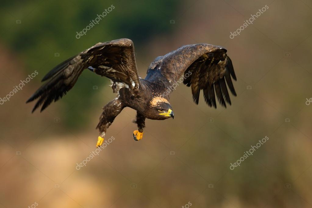flying dark brawn bird