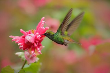 Hummingbird flying next to flower
