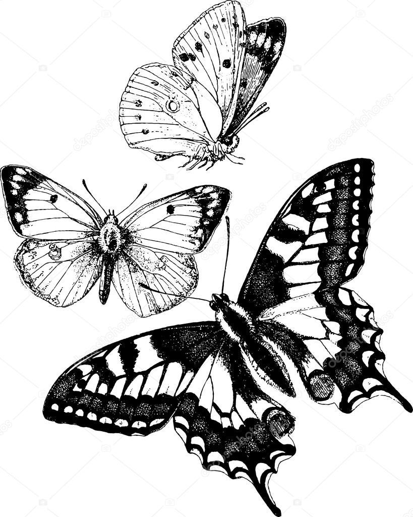 Papillon dessin vintage photographie - Dessin de petit papillon ...