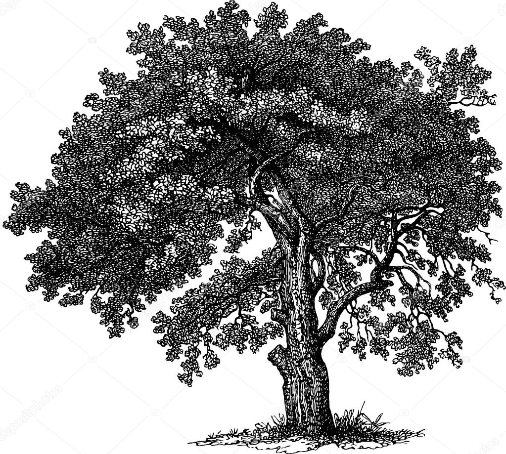 u00c1rbol de dibujo vintage foto de stock  u00a9 unorobus gmail com 112186858 tree trunk clipart template free clipart tree trunk