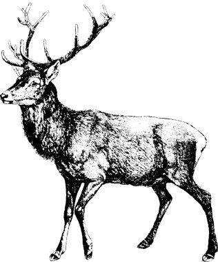 Vintage image deer