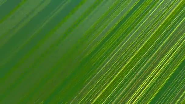 pozadí točivých čar v zelené a žluté barvy