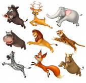 Fotografia collezione di animali selvatici
