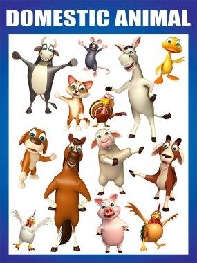 domastic animal chart