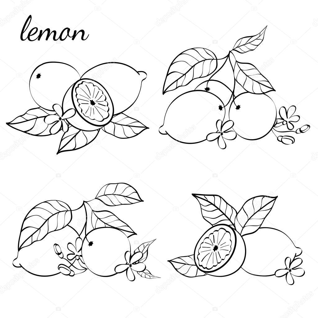 Ilustración de frutas cítricas — Vector de stock © AleksandraRu ...