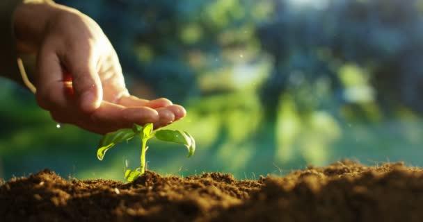 ruční zalévání rostlin