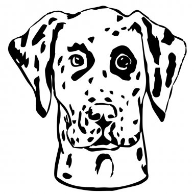 Graphic vector illustration of Dalmatian Dog. Isolated Vector Dog Portrait.