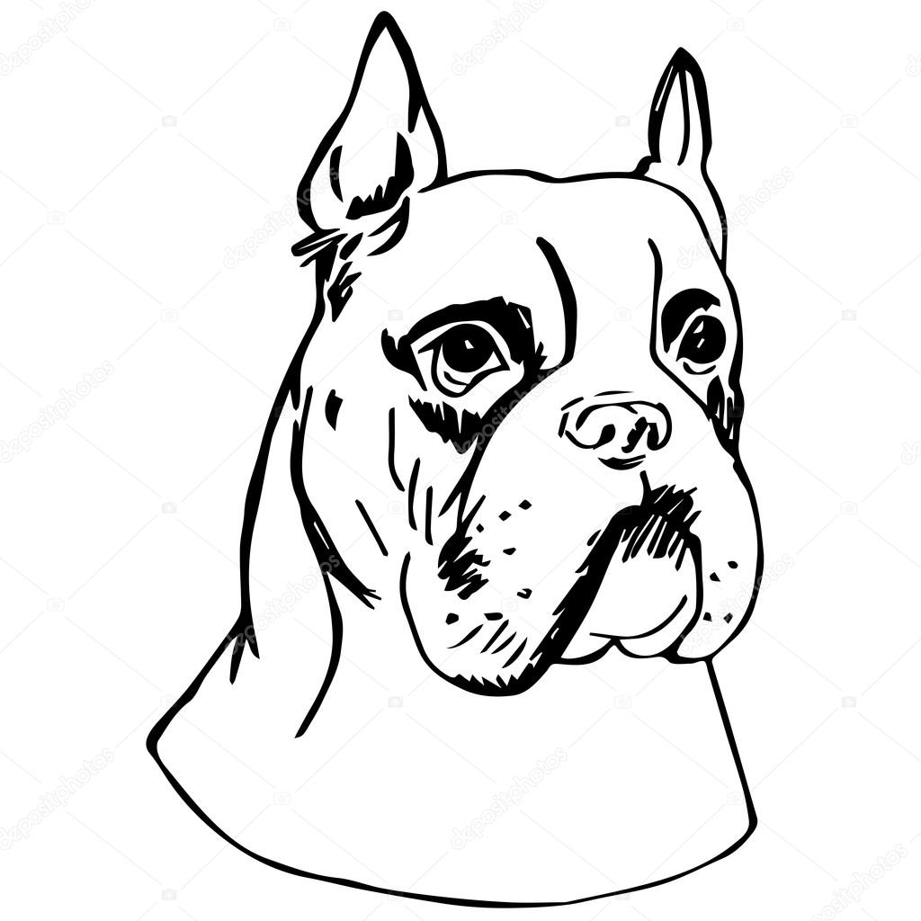 Line Drawing Of A Boxer Dog : Graphic vector illustration of german boxer dog isolated